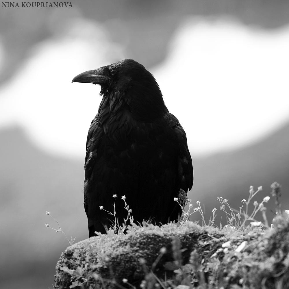 raven glacier 3 square 1000 px.jpg