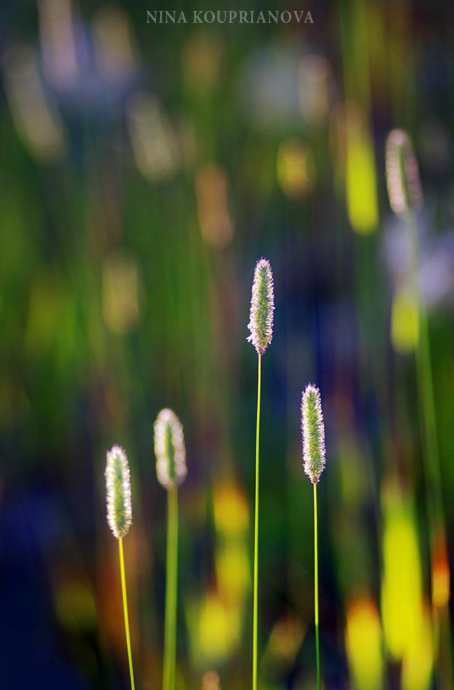 four grass 1000 px.jpg