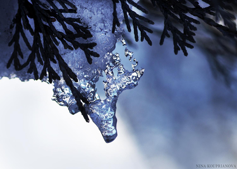 macro ice 2016 a 1500 px.jpg