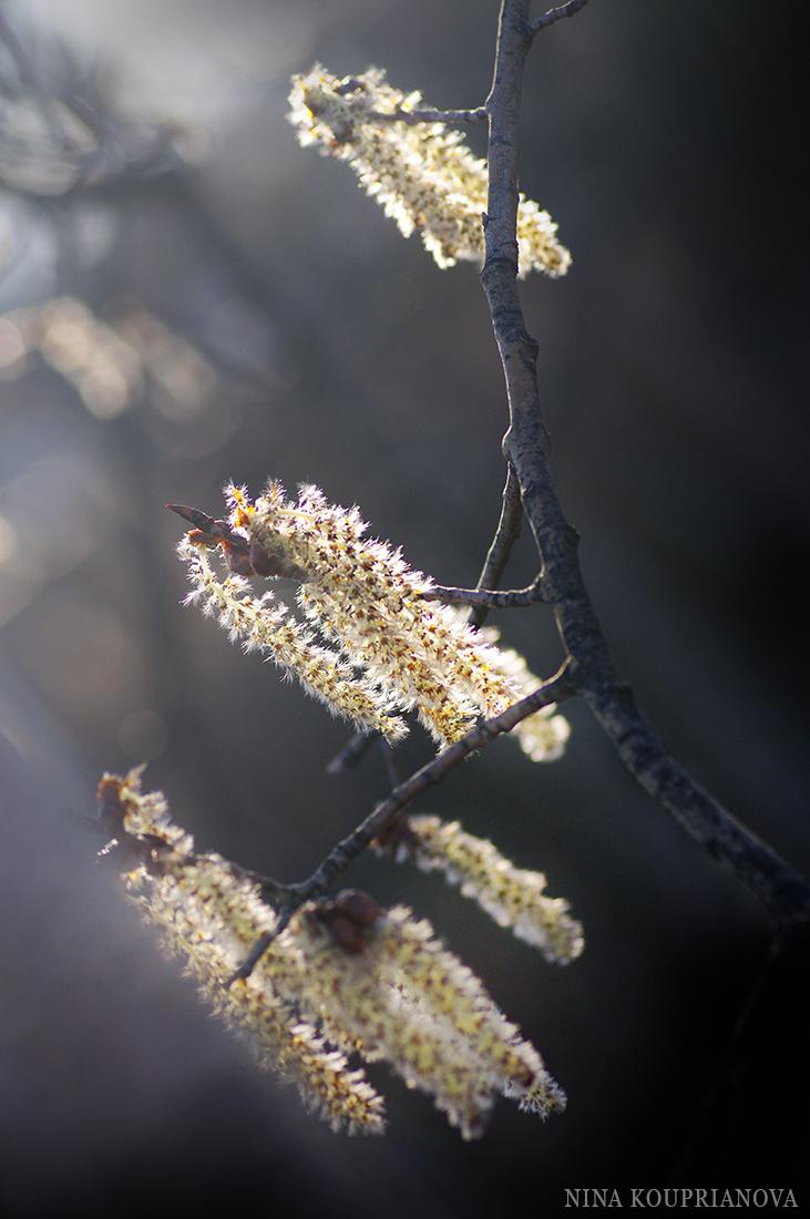 aspen glow april 1100 px.jpg