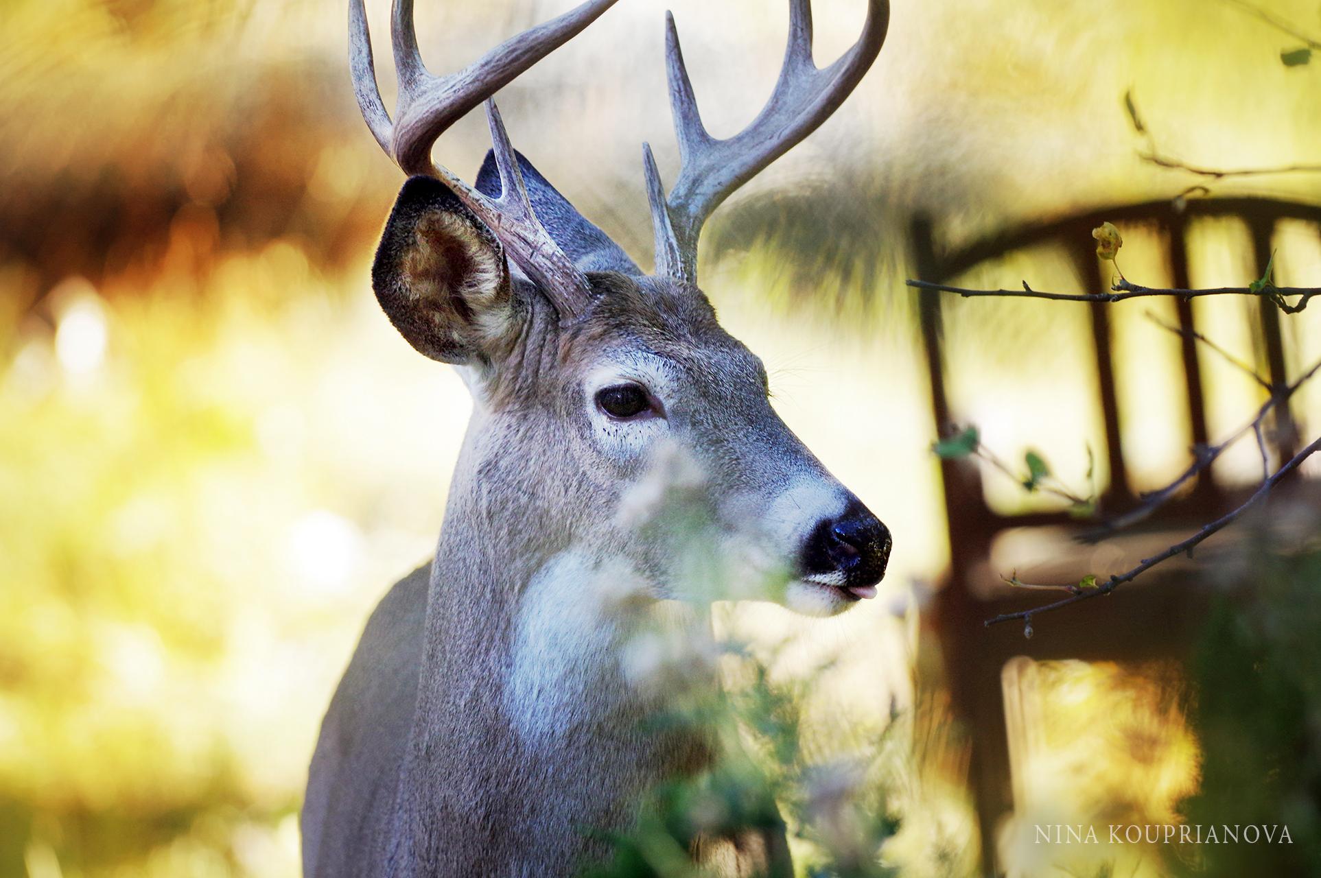 deer antlers chair 1900 px.jpg