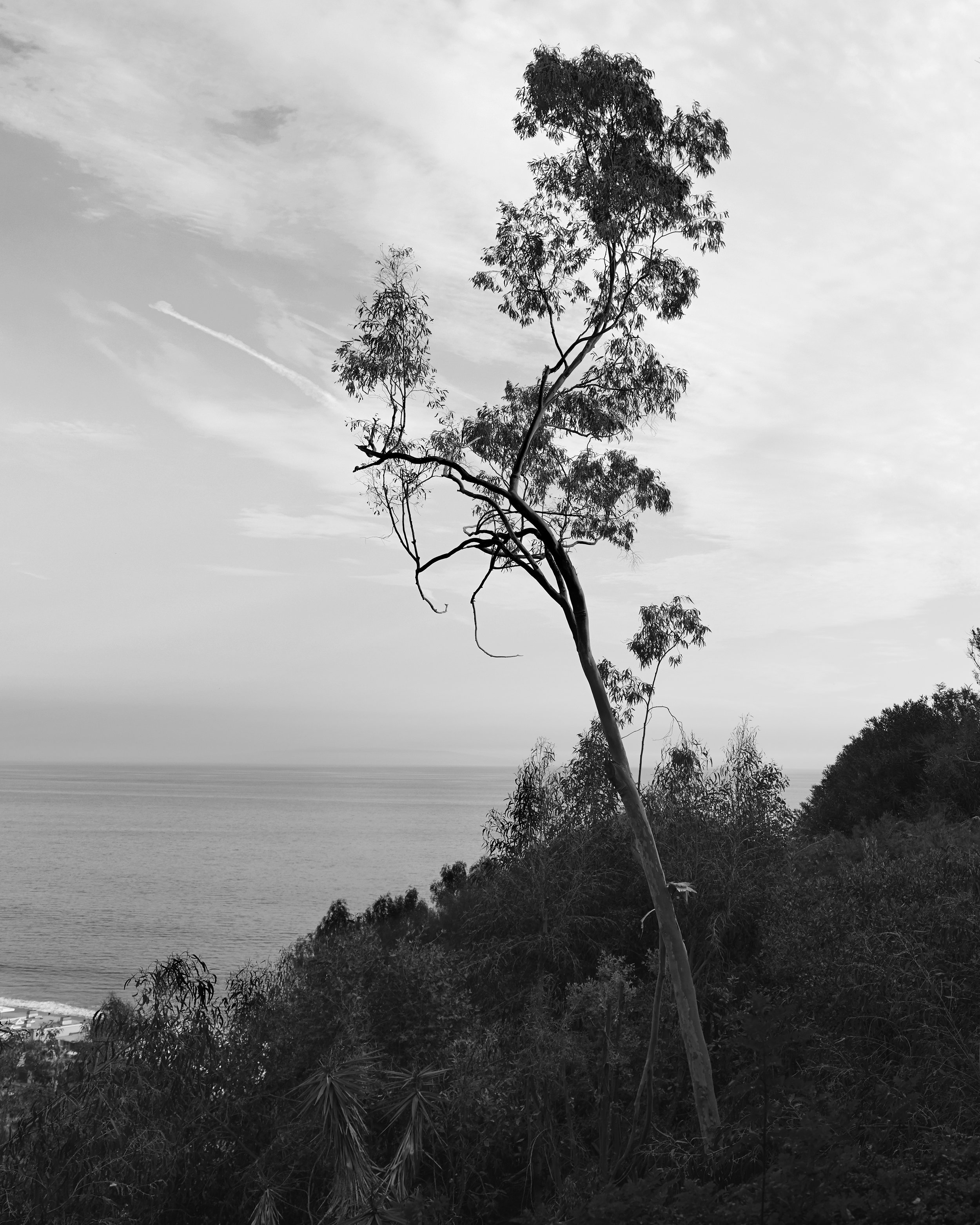 _MG_7542_tree_bw.jpg