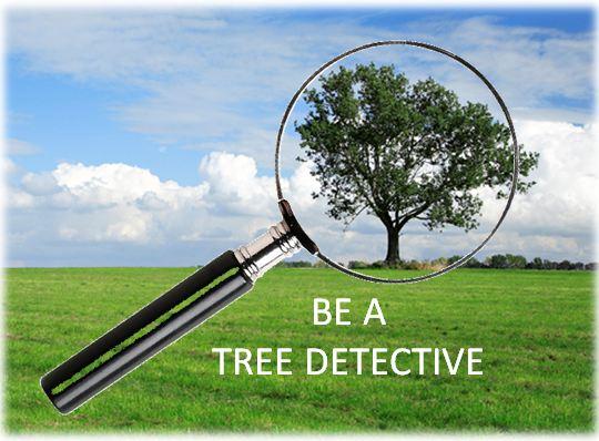 tree detective.JPG