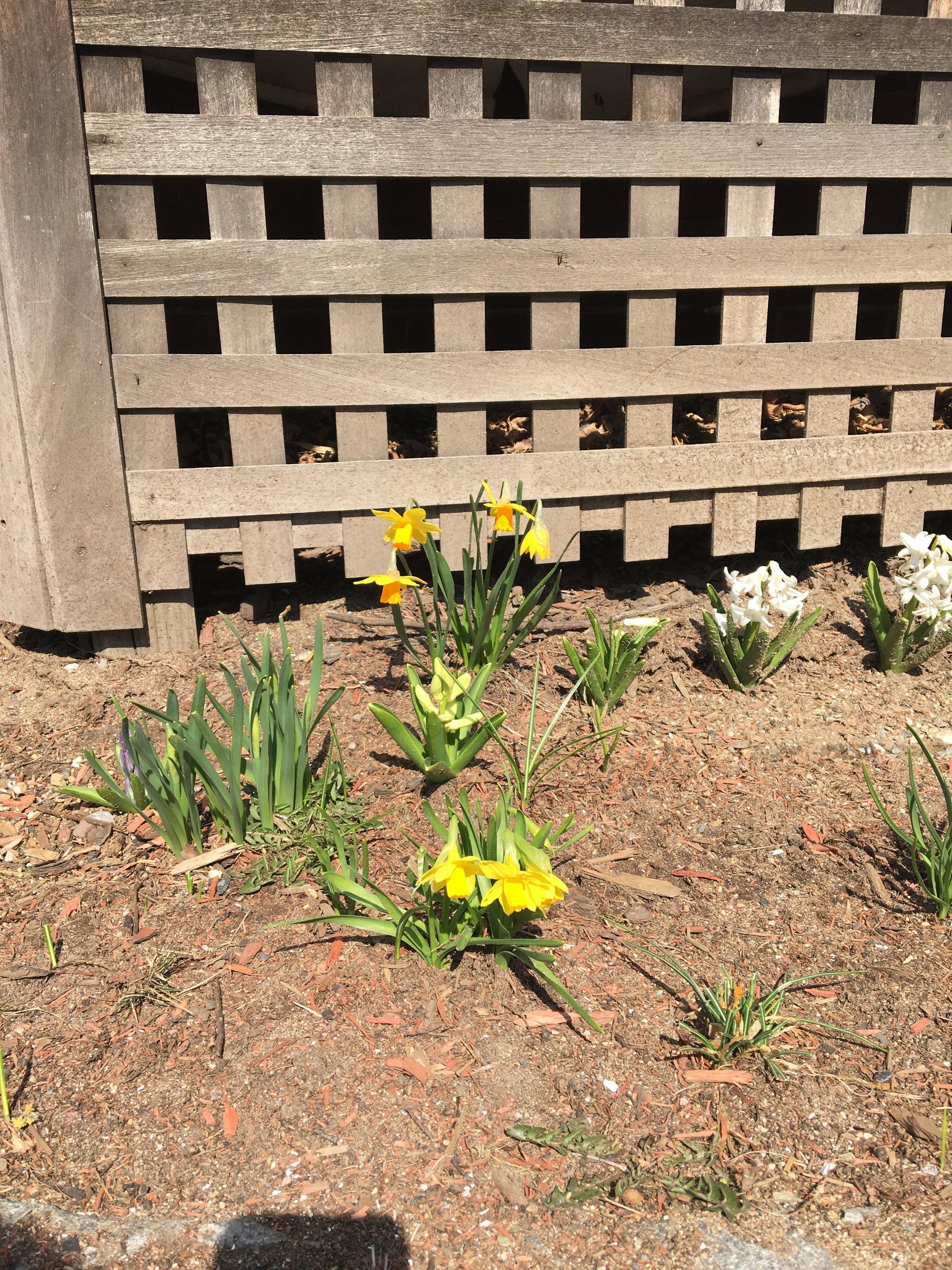 Photo Apr 12, 10 42 10 AM.jpg