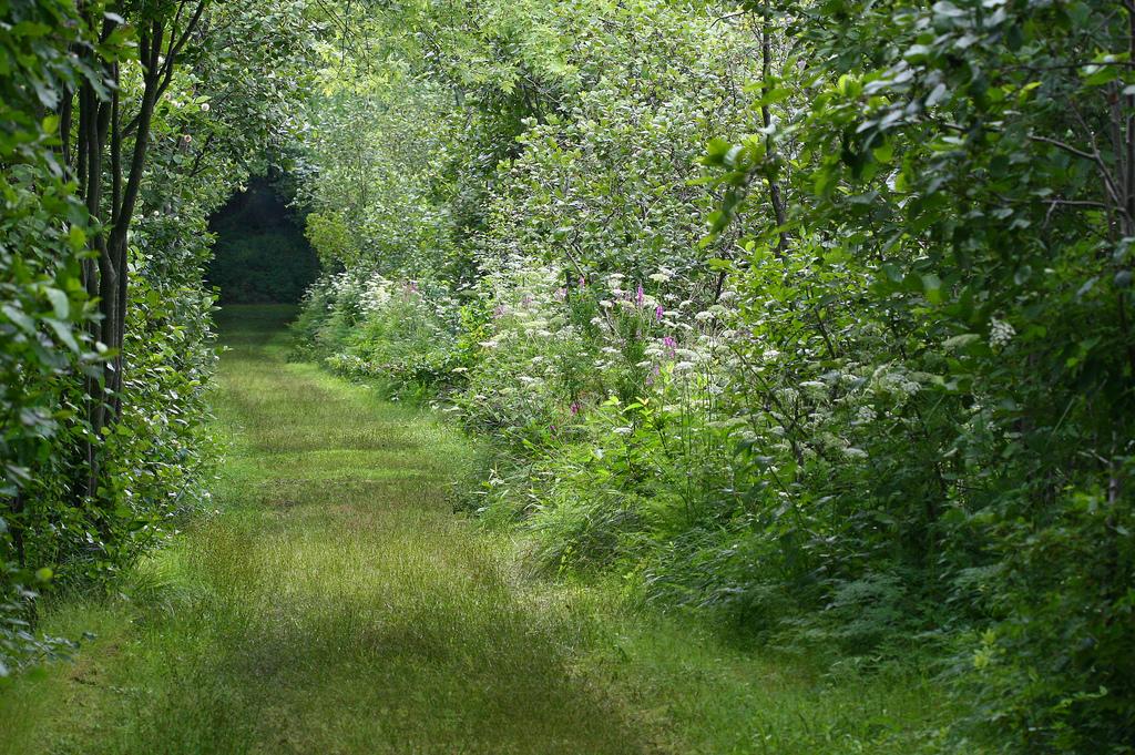meadow-path.jpg