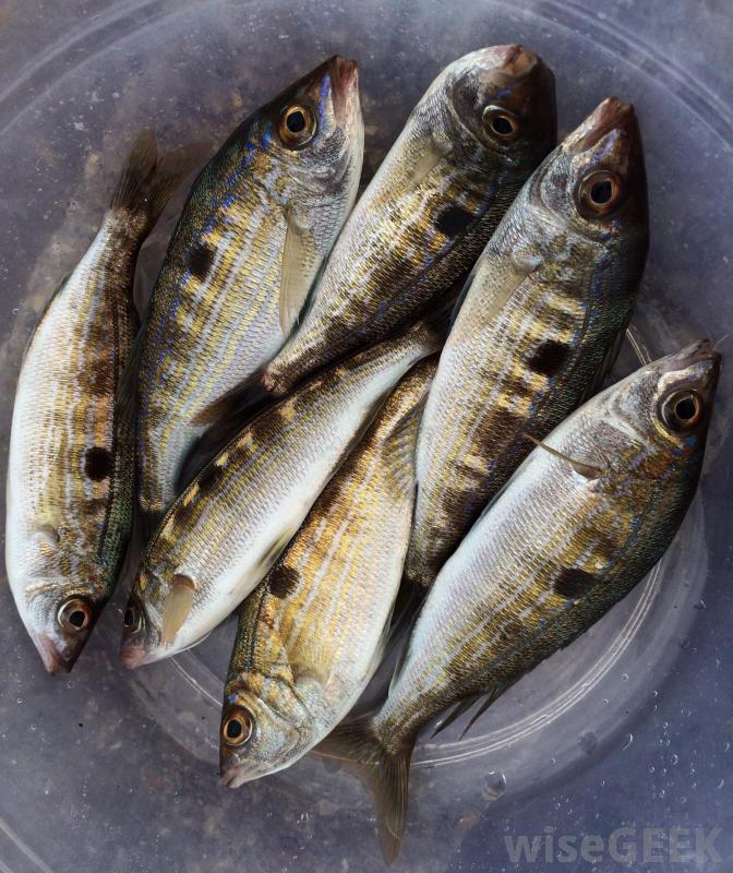 raw-fish.jpg