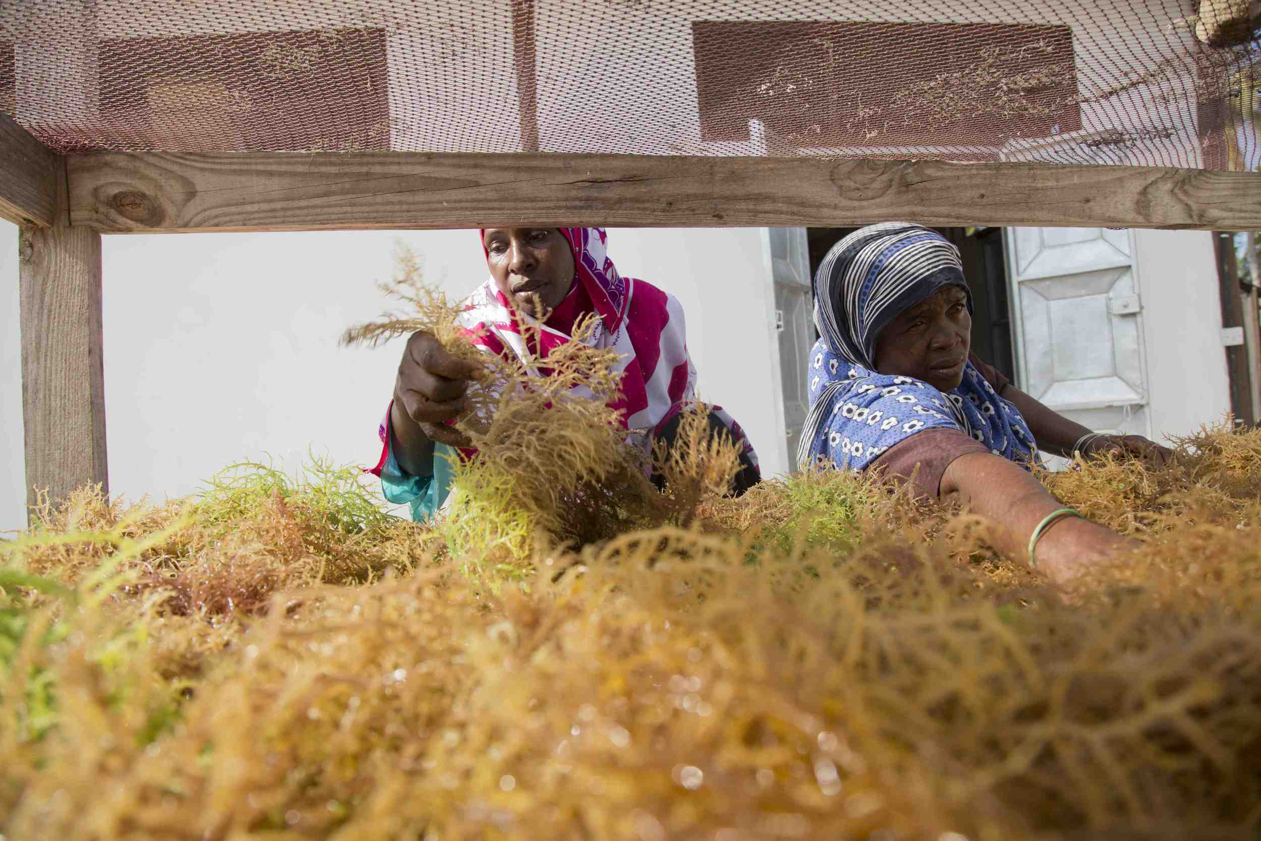 seaweed women 2.jpg