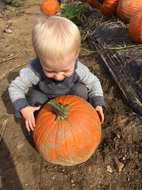 Tommy and his pumpkin. We made delicious pumpkin cookies that were gluten free and healthy