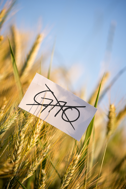 gmo crop picture .jpg