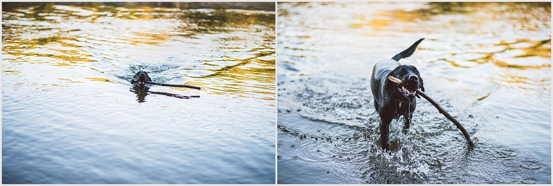 Meritage_minnehaha_dog_park_engagement_photo_minneapolis_by_lucas_botz_photography_06.jpg