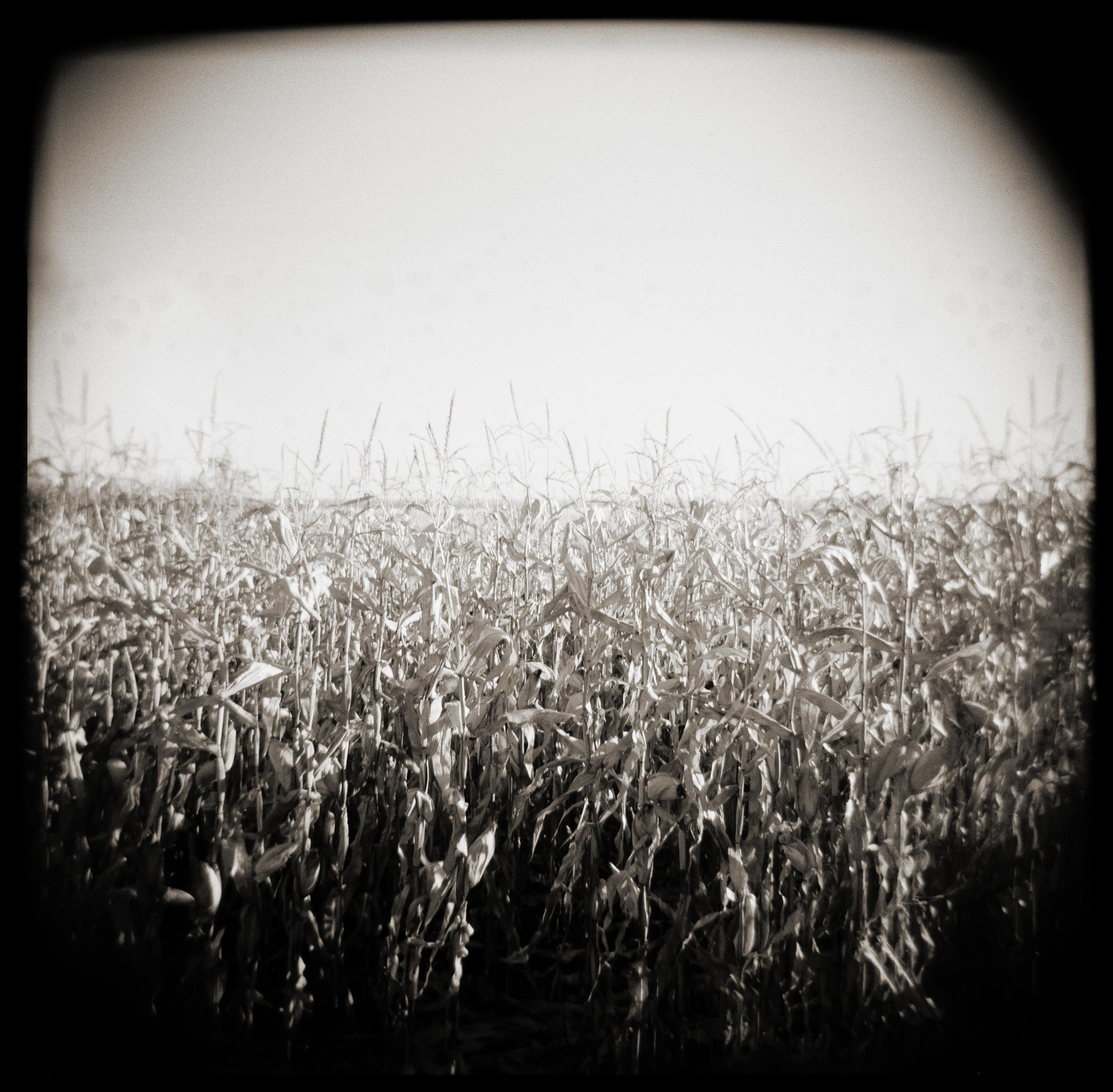 Field of Corn.jpg
