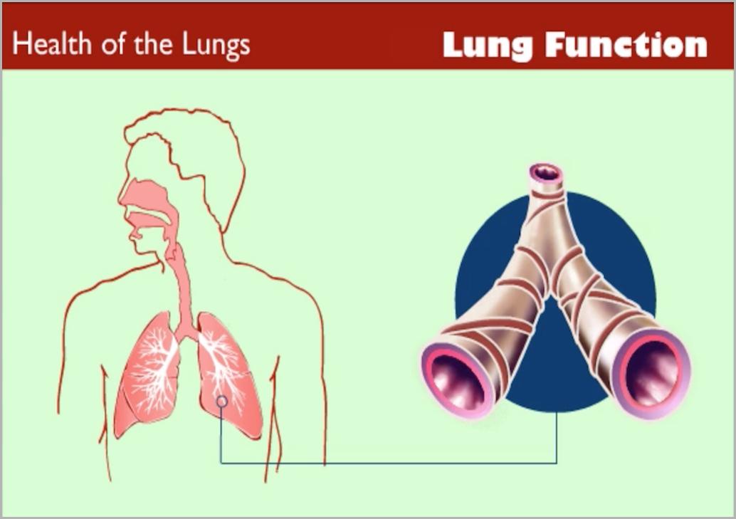 spirometryfundamentals.png