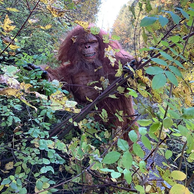 So we're hiking through the Kootenai forest in Montana and I see this thing in the woods and Leo starts acting weird and I grabbed a quick photo and then it was gone. Not sure what it was?? #sasquatch #bigfoot #furryfriends