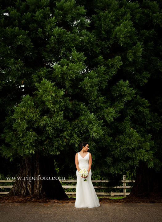 Portrait of bride in Tualatin, Oregon by Ripe Photography.