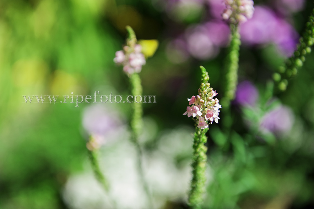 Summer flowers in bloom by Ripe Photography.