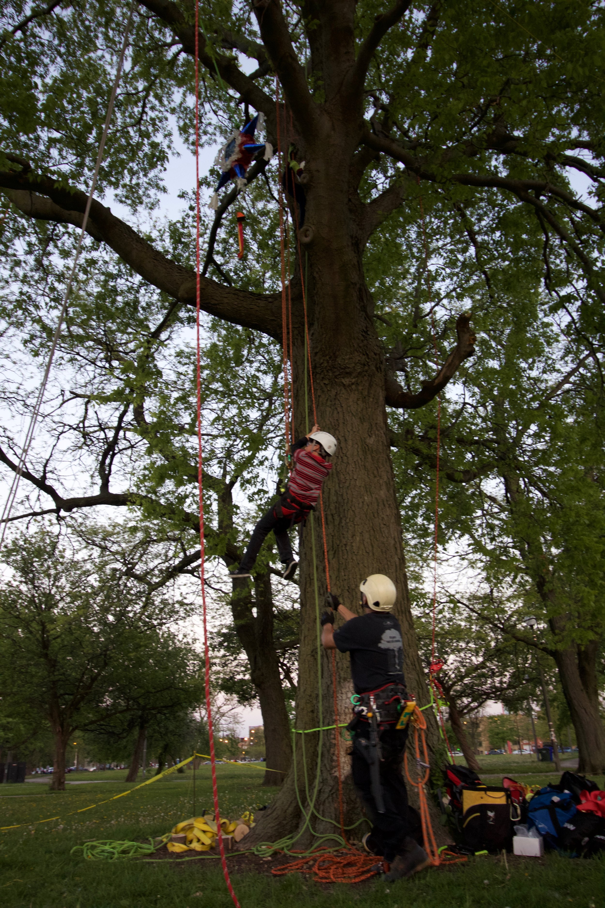 An event goer climbs a tree in Humboldt Park, May 2017