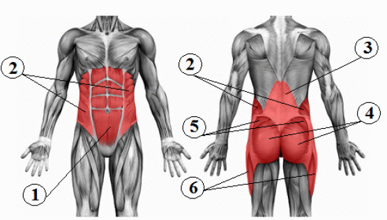 core-anatomy.png