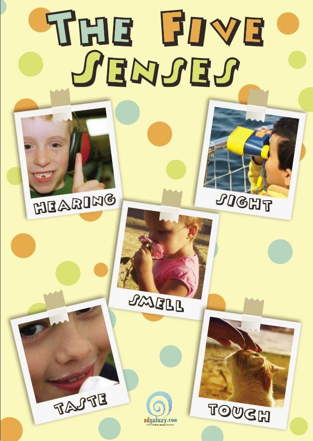 5 senses poster.JPG