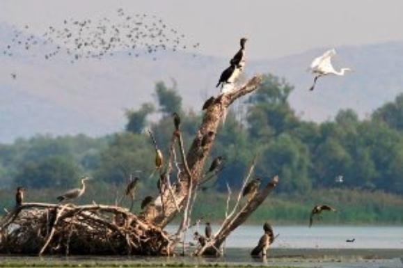 ABOVE/BELOW Avifauna wildlife from Lake Shkodra/Skadar