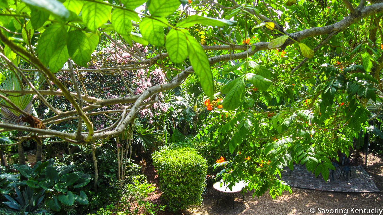 Hemingway House garden