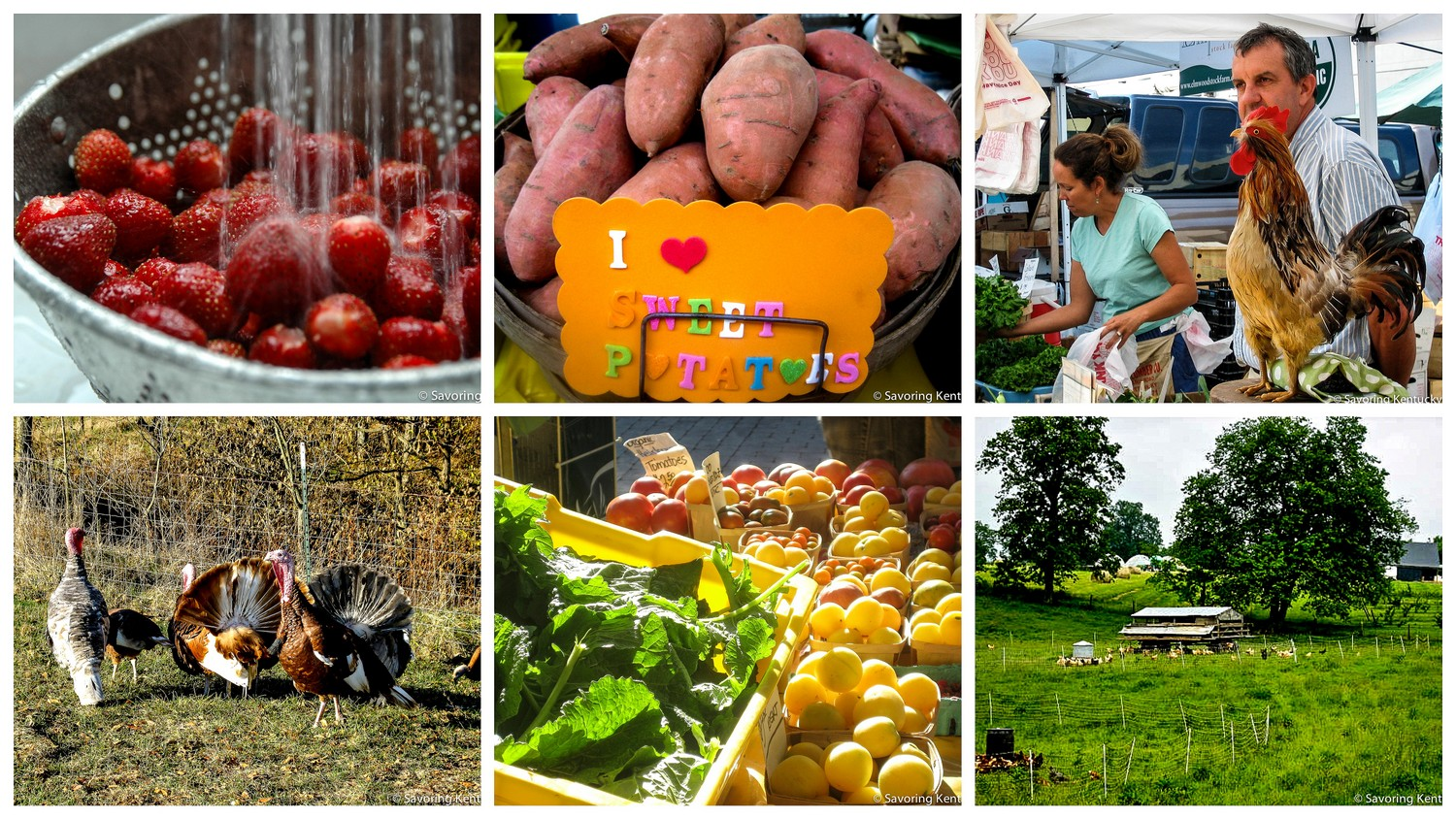 "Images from Elmwood Stock Farm's certified organic bounty, top row from left: strawberries; sweet potatoes; Ann Bell Stone, Mac Stone, and Robby the Rooster at the  Lexington Farmers Market .  Bottom row from left: Elmwood's amazing turkeys; sunlit summer vegetables at the Lexington Farmers Market, chickens on grass with ""chicken tractors."""