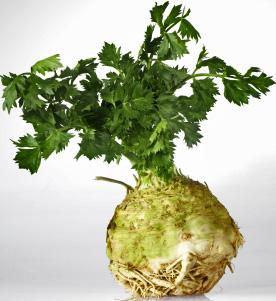 Celeriac, or Celery Root