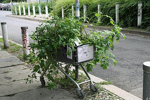 A grocery cart hosts potato plants