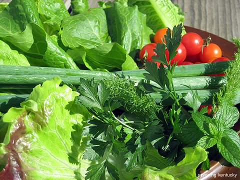 The salad raw ingredients