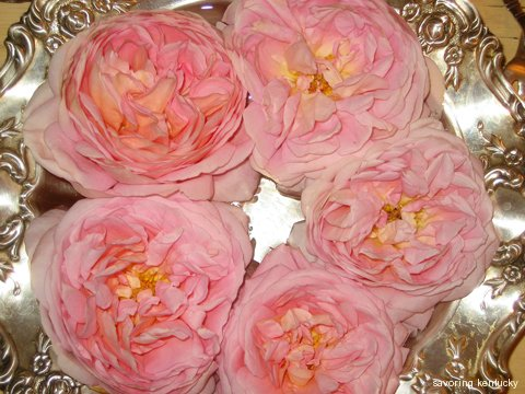 Beautiful Abraham Darby rose in silver bowl, late fall 2009