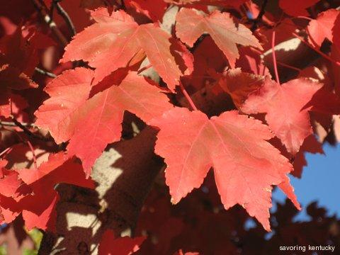 Autumn Leaves, Old Episcopal Burying Ground, Lexington, KY