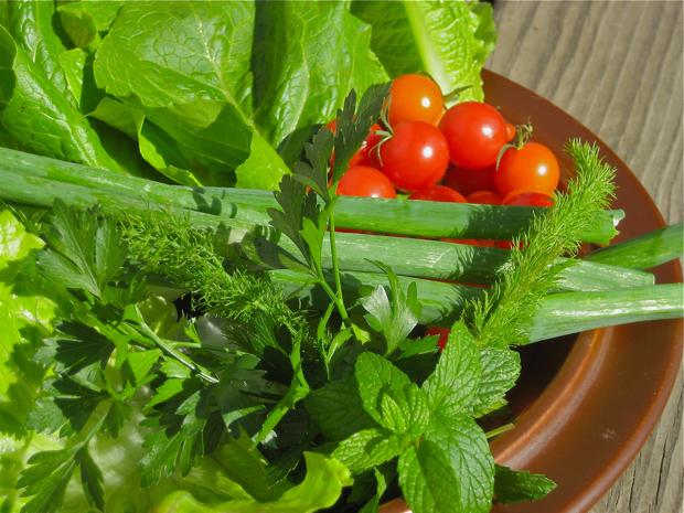 Fresh Salad Ingredients from the Campsie Garden