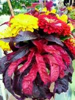 Hazelfield Flowers 1