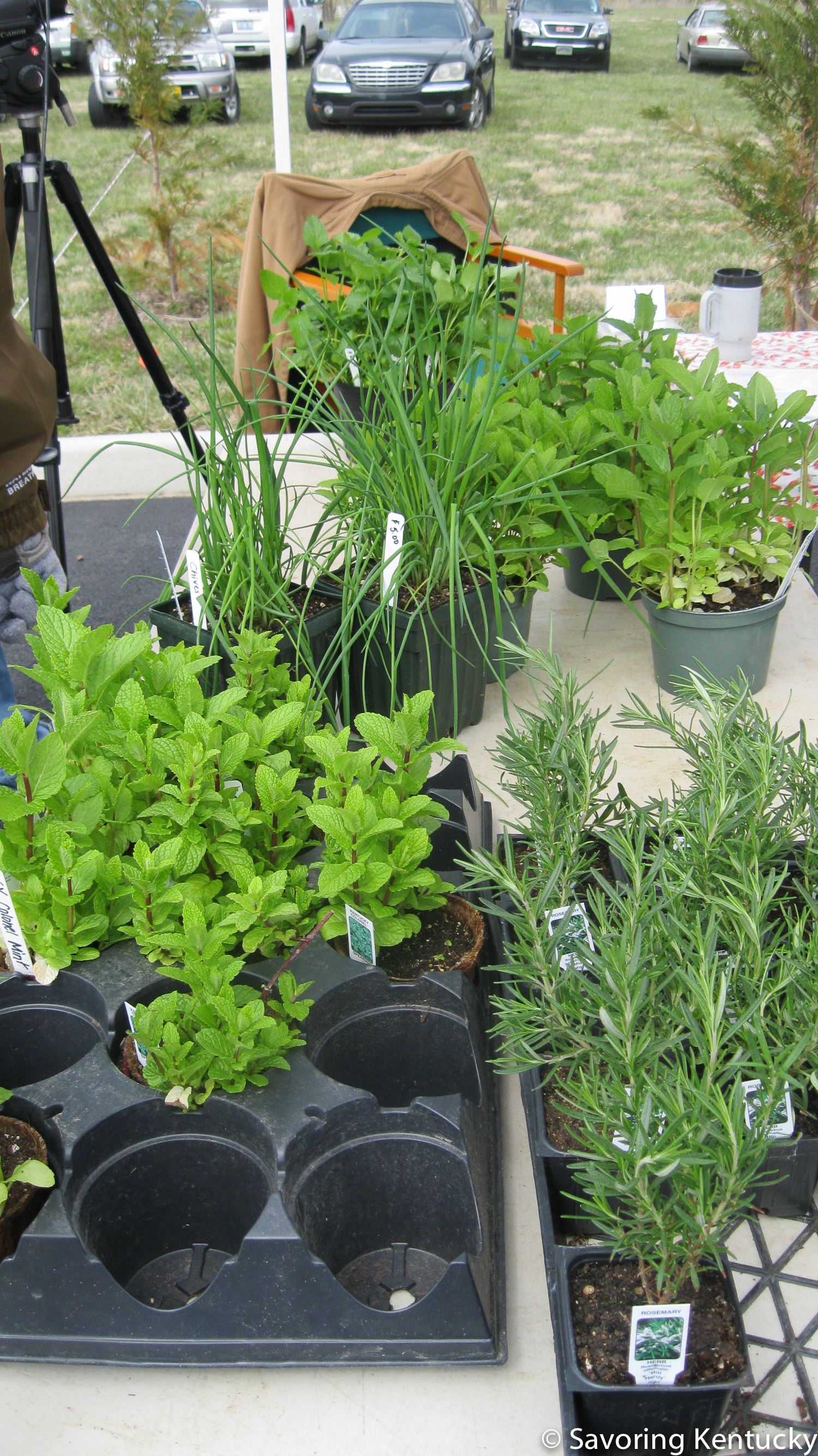 Early Plants On Offer