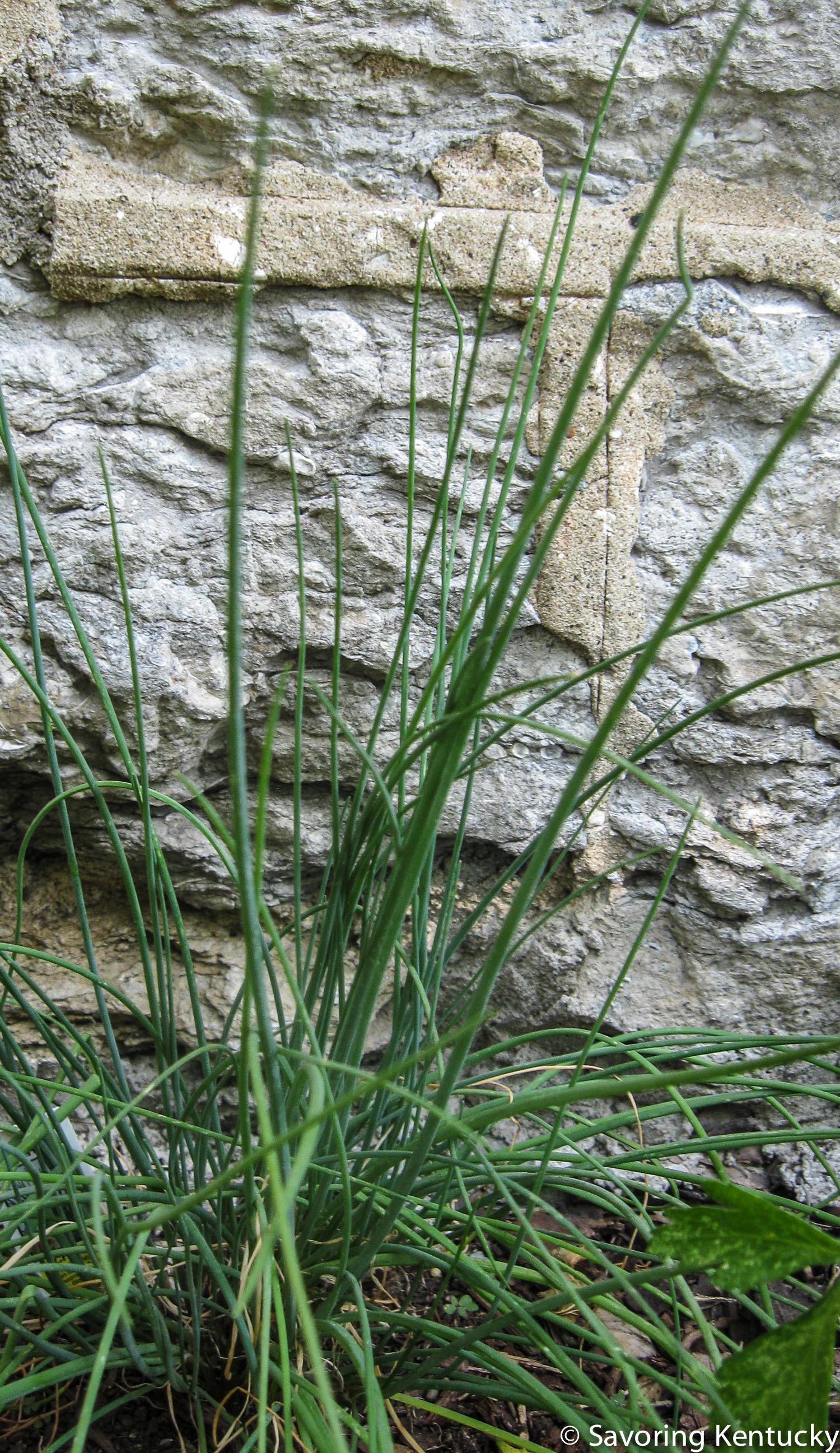 herbs1-2.jpg