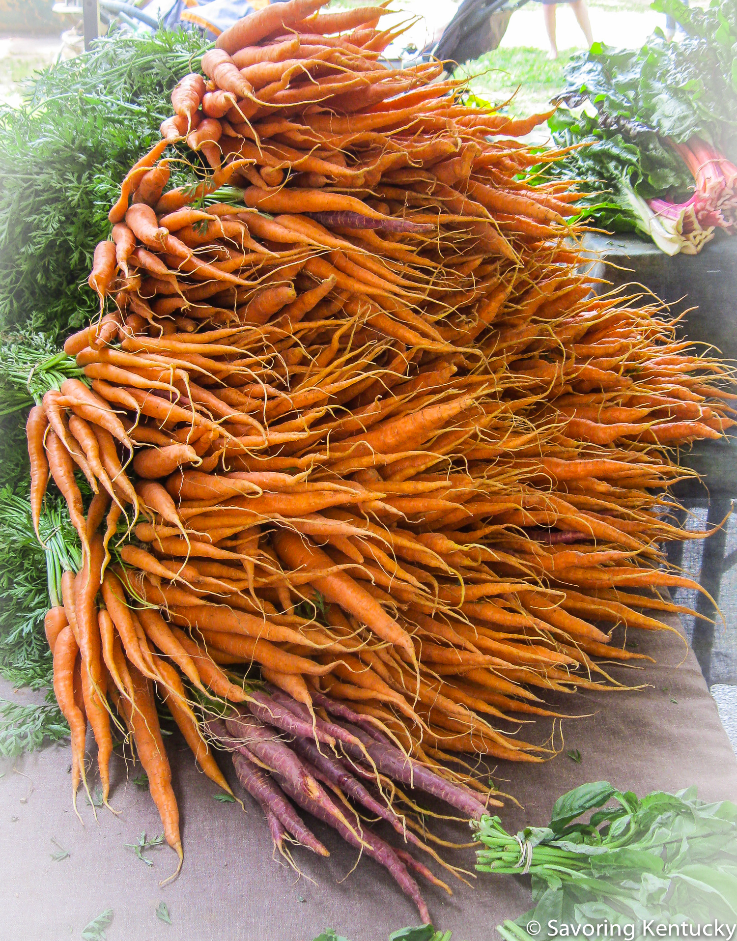 Carrot burst, from Pavel's Farm, with one red bunch