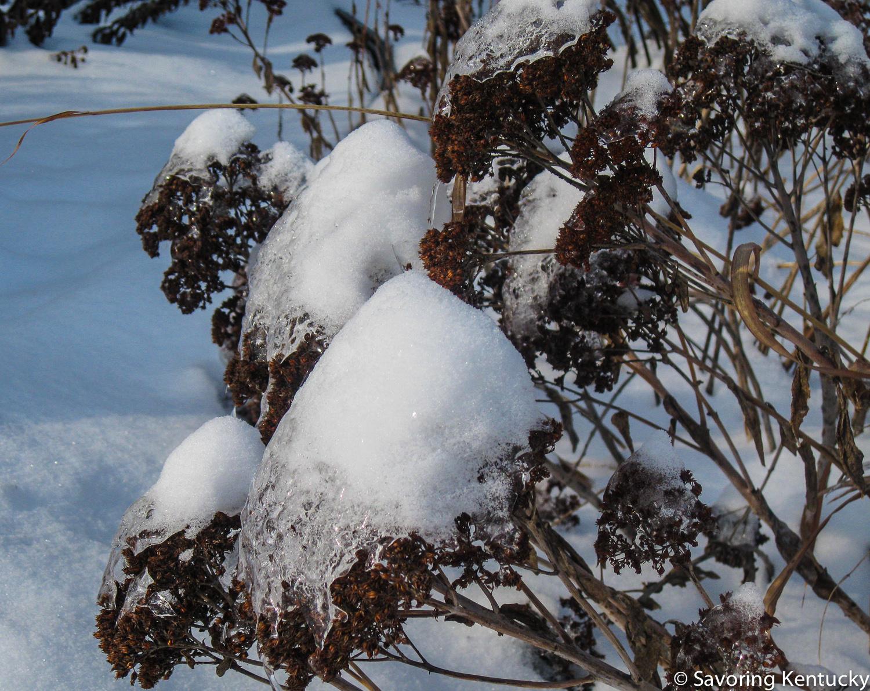 snowtopping-2.jpg