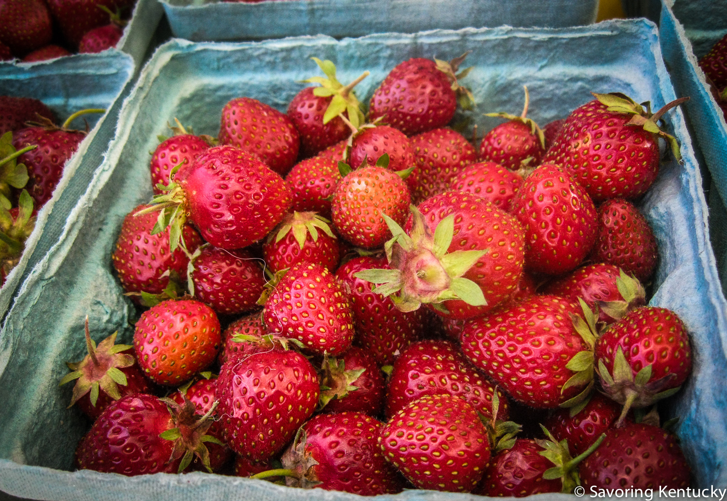 Organic strawberries, Elmwood Stock Farm, Lexington Farmers Market.