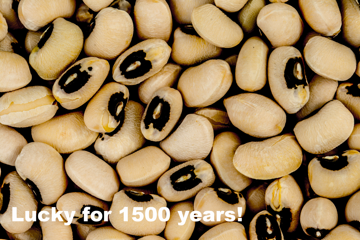 """Black-eyed peas  ( Vigna unguiculata subsp. unguiculata .) Photo credit: """"BlackEyedPeas"""" by Toby Hudson - Own work. Licensed under CC BY-SA 3.0 via Commons - https://commons.wikimedia.org/wiki/File:BlackEyedPeas.JPG#/media/File:BlackEyedPeas.JPG"""