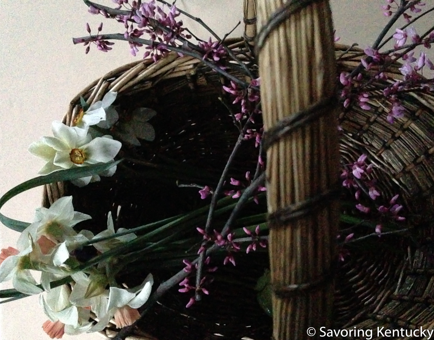 """A basket of backyard beauty from Campsie Place. """"Katie Heath"""" and  poeticus   narcissi , and redbud with Wayne County roots."""