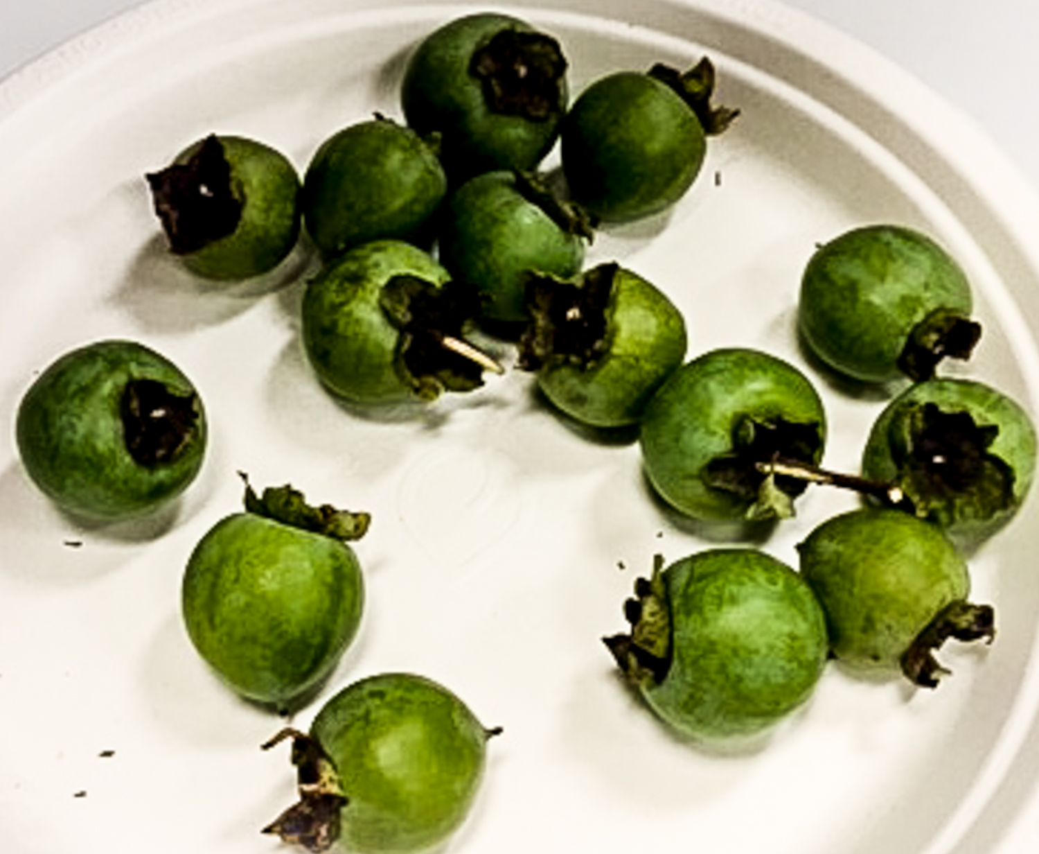 When Chef Ouita Michel visited the Kentucky State Fair two weeks ago, she discovered that wild persimmons and pawpaws had to be entered and judged in their unripened, green phase. Phew!  Photo credit: Ouita Michel--thank you!