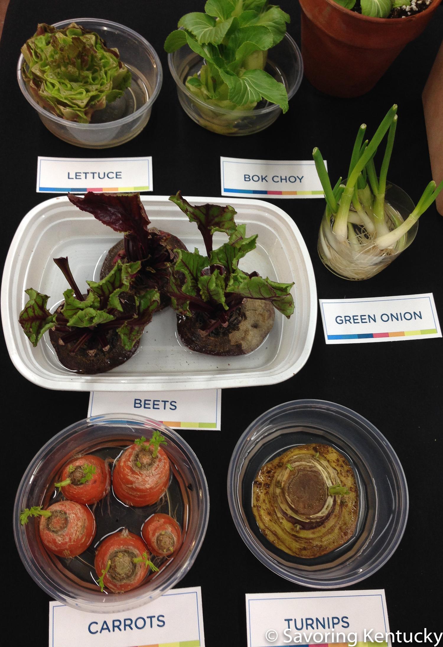 Some veggies regrow—some.