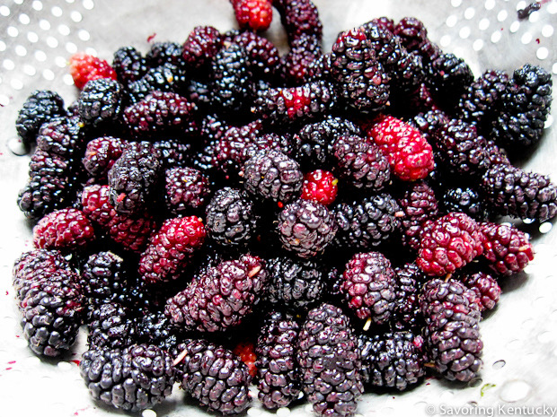 Ahhhh, mulberries! You delight us.