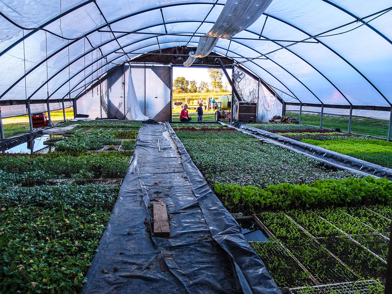 Elmwood Stock Farm  hoop house, or high tunnel. Elmwood farmers have practiced season extension for years as part of their organic farming operations.