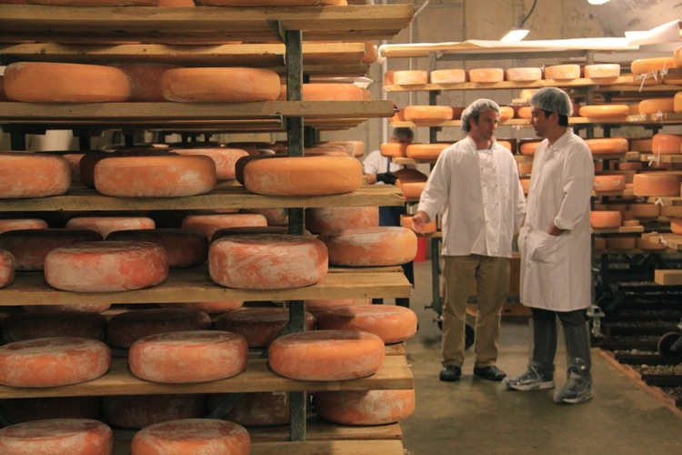 In another vault, cheese are varying size and texture are washed with brine to develop a rosy hue and meaty flavors.