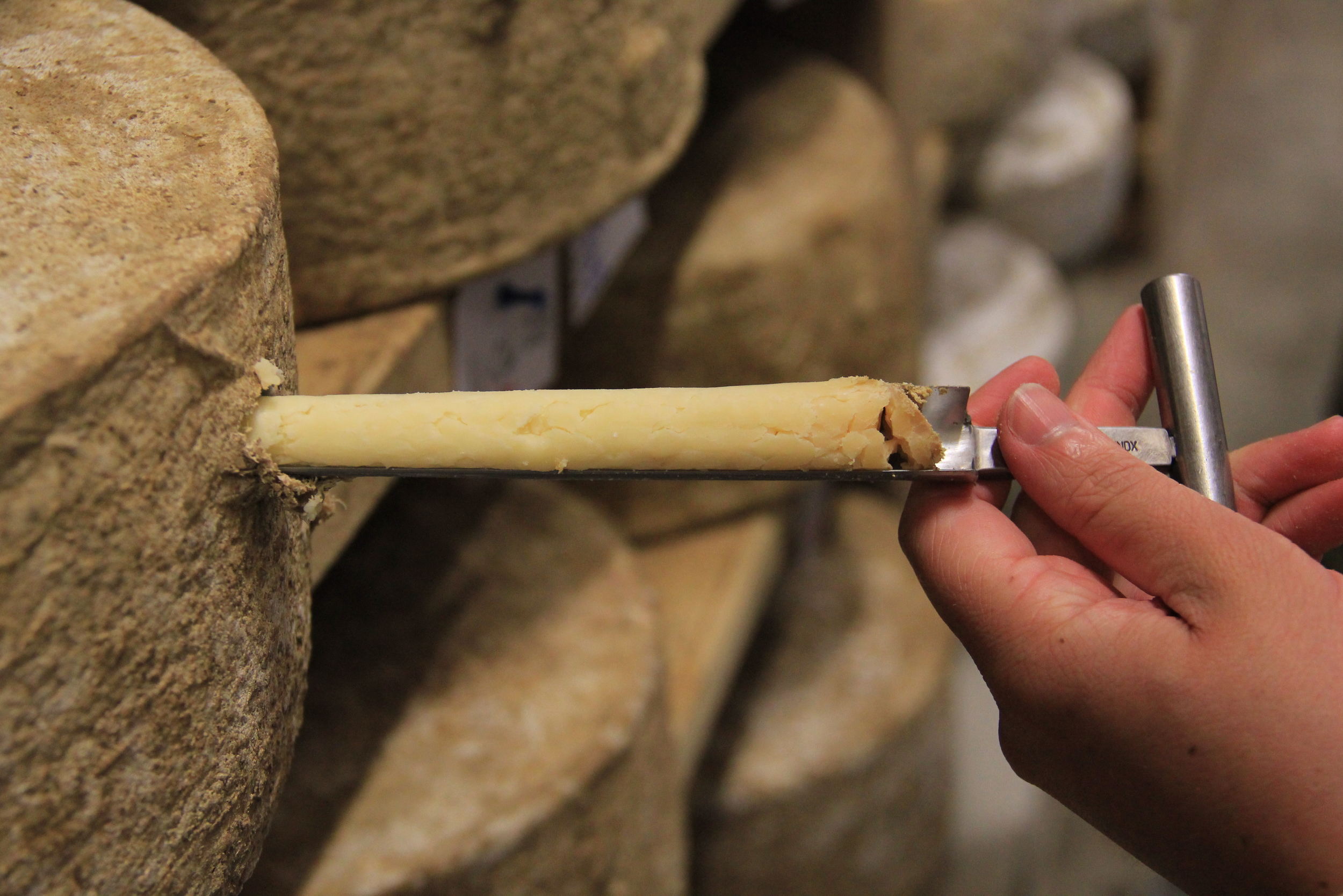 Cheeses are tasted using this trier as they approach maturity. Wheels are deemed ready based on flavor, not on exact age. Several ideal flavor profiles are possible, and generally occur between 10 and 13 months of age.