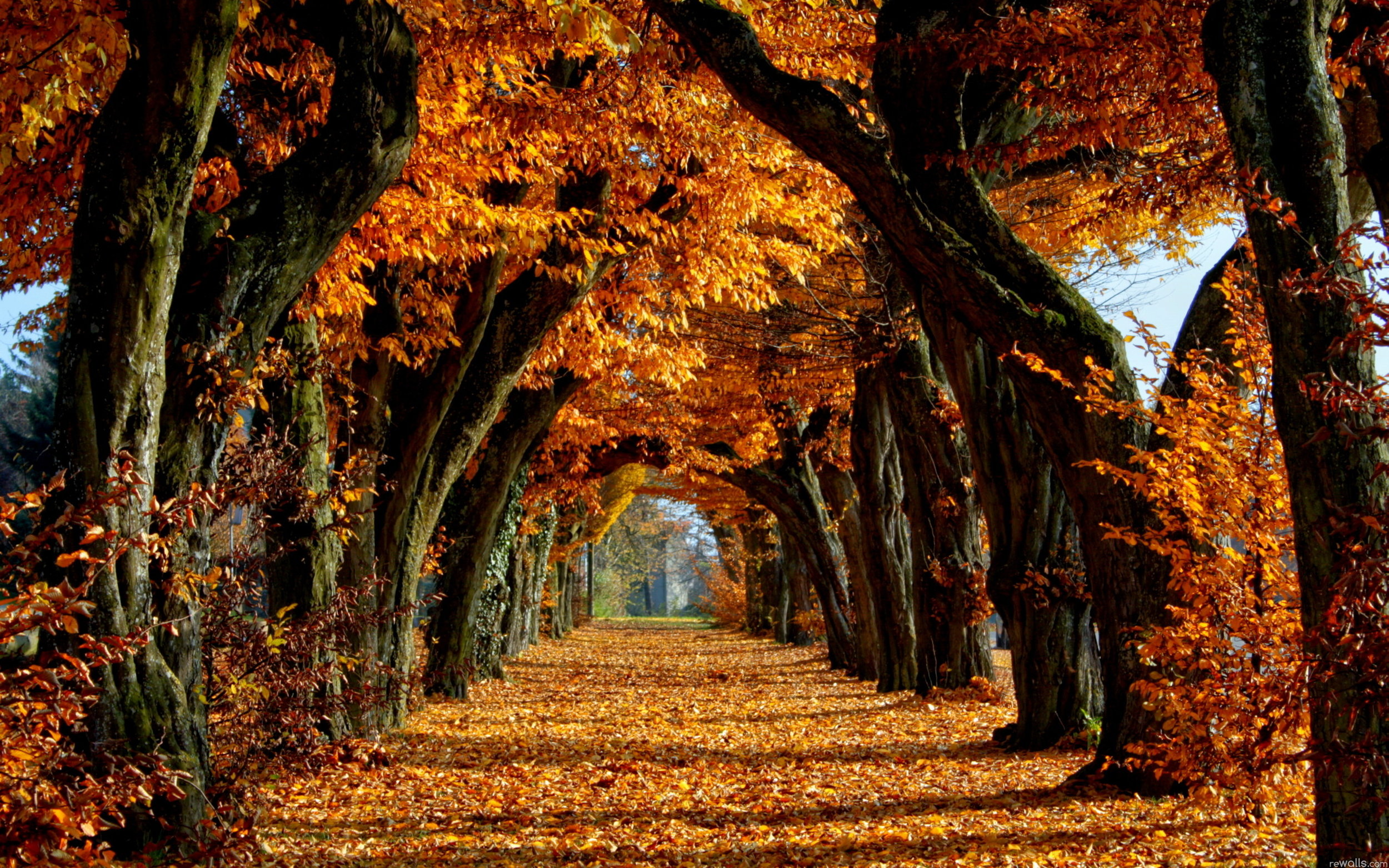 New-Fall-Autumn-Trees-Leaves-Nature-Wallpaper.jpg