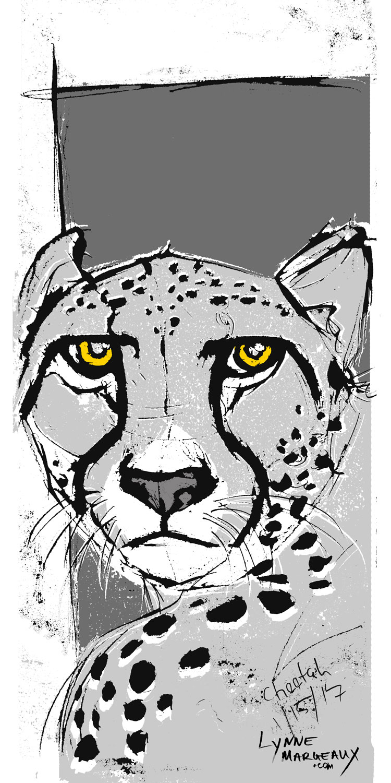Cheetah 2017