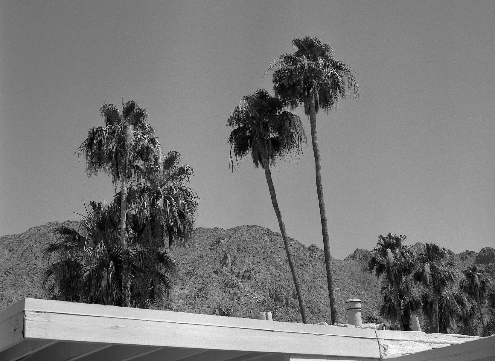 Palm Desert  by  Kirsten Harkonen.  Lives in San Francisco, CA.