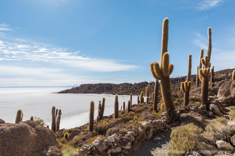 Island In The Salt Flat 3, Uyuni, Bolivia