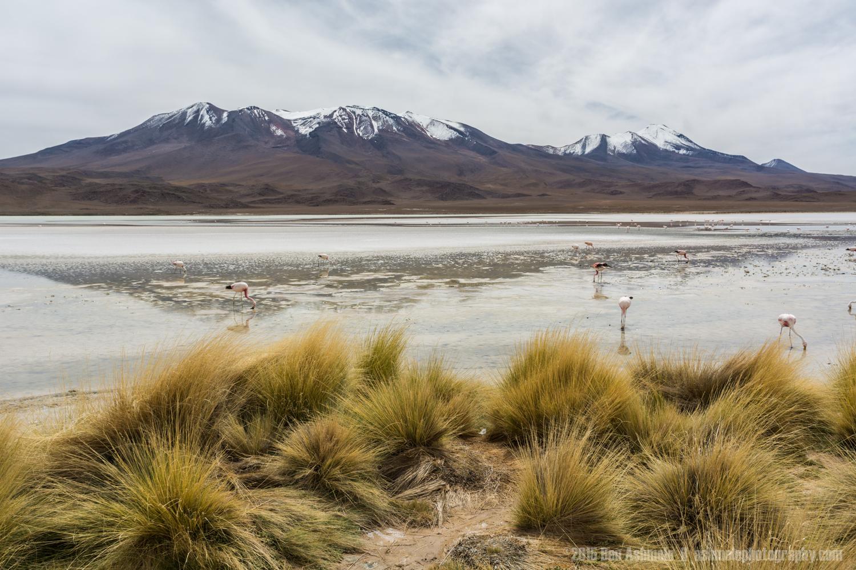 Lake Flamingos 2, Lake Chiar Kota, Bolivian Highlands